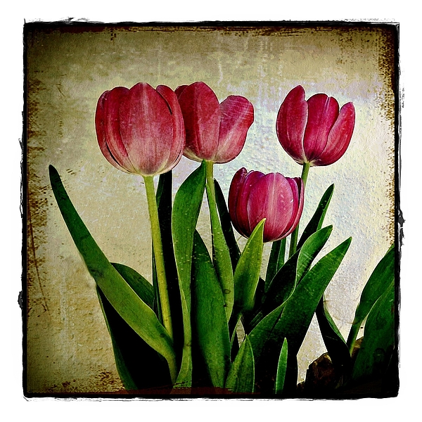 Patricia Strand - Deep Pink Tulips