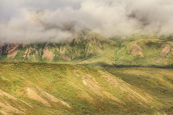 Joni Eskridge - Denali National Park Mountain Under Clouds