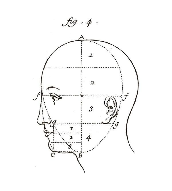 Diagram Of A Head Antique Anatomy Digital Art