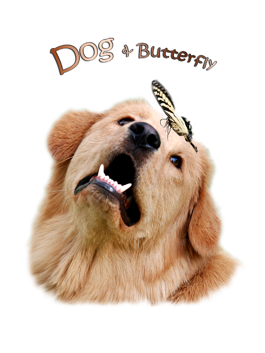 dog and butterfly youth t shirt for sale by christina rollo. Black Bedroom Furniture Sets. Home Design Ideas