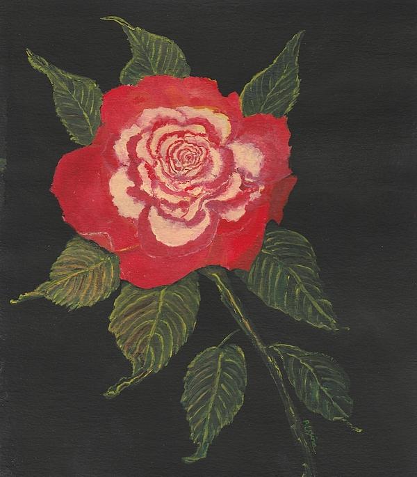 Regina Taormino - Double Delight Rose
