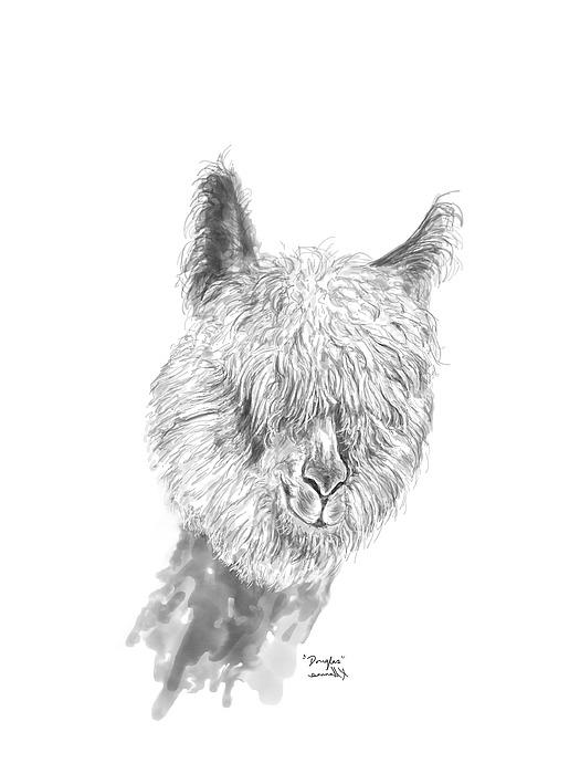 Douglas Drawing