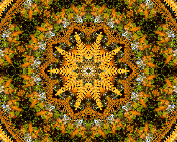 Imagining Autumn Digital Art