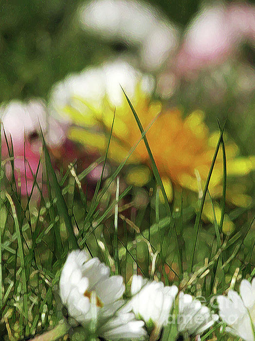 Kim Tran - Dreamy Spring