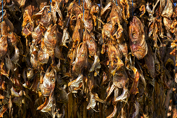 Stuart Litoff - Drying Fish Heads - Iceland