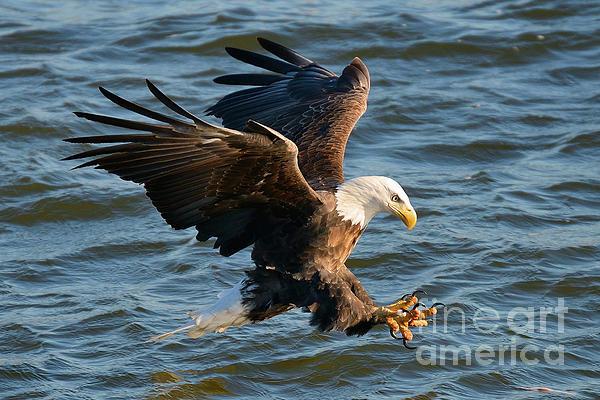 Davids Digits - Eagle action