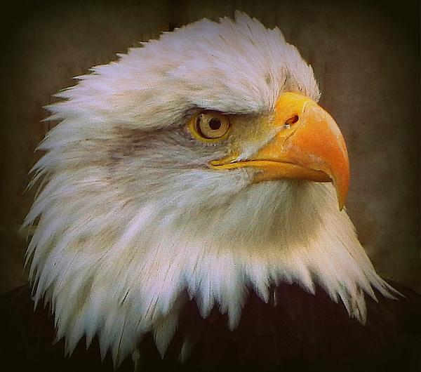 Karen Cook - Eagle Eye