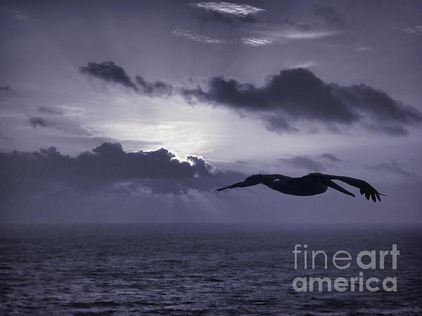 Jeff Breiman - Pelican At Sunrise