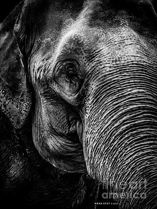 Mona Stut - Elephant Portrait Black White