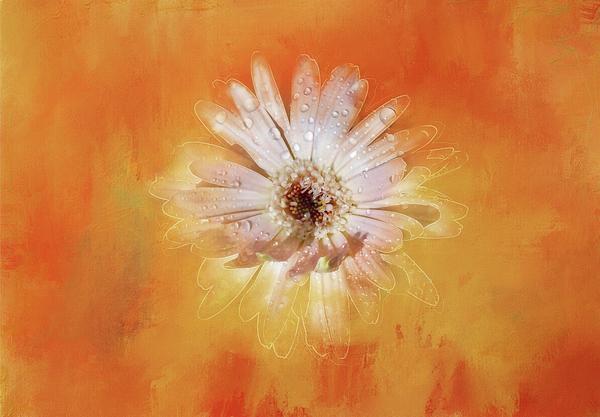 Terry Davis - Emerging Beauty