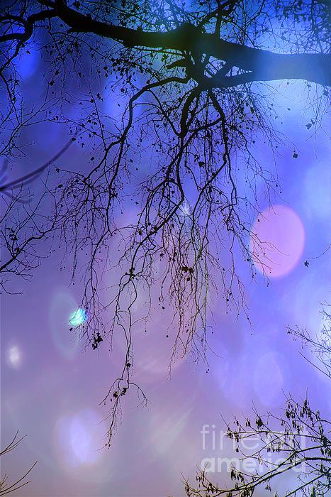 Barbara Molocznik - Enchanted Night