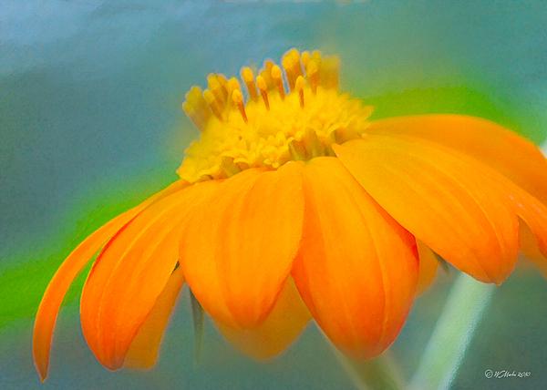 William Martin - Evening Orange Greeting Card