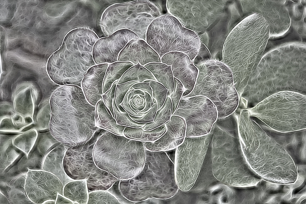 Sharon McConnell - Flower Power