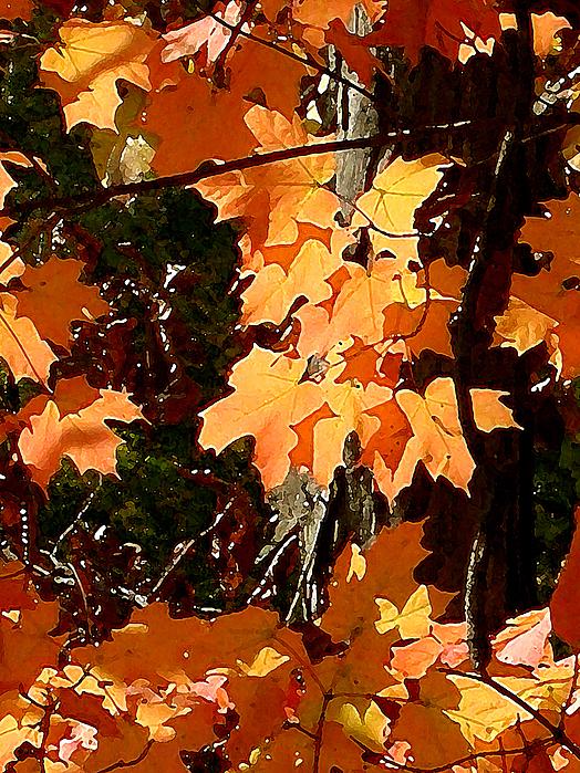 Paul Sachtleben - Fall Foliage