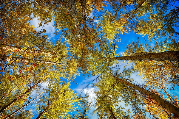 Lynn Hopwood - Fall is in the air