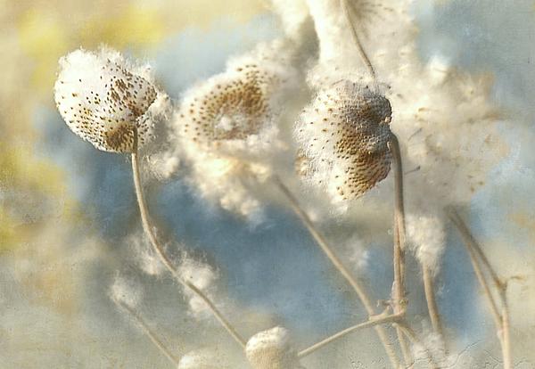 Jeff Burgess - Fall seeds