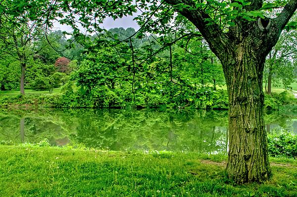 Geraldine Scull - Feeling green