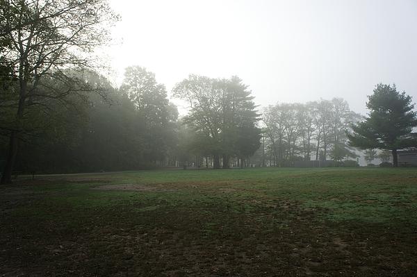 Adam Gladstone - Field on a Foggy morning