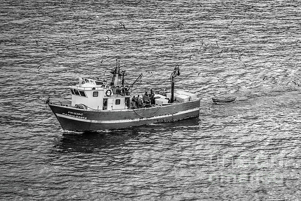 Liesl Walsh - Fishing Boat Arriving in Funchal, Madeira, Portugal, Blk Wht