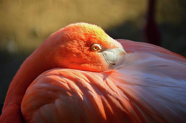Ronda Ryan - Flamingo