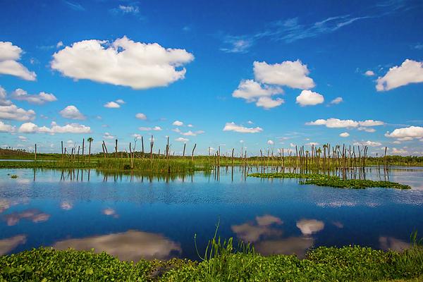 Felix Lai - Florida Wetland