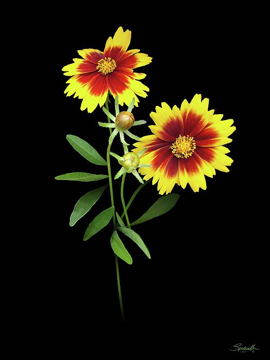 M Spadecaller - Florida Wildflowers