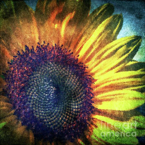 Colin Hunt - Flower-077-Sunflower-PhotoArt