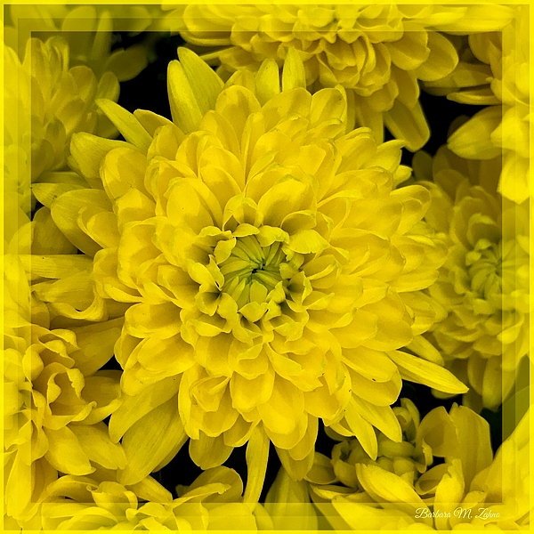 Barbara Zahno - Flowery Poetry