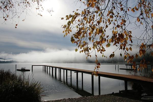 Cheryl Rose - Foggy Autumn Morning
