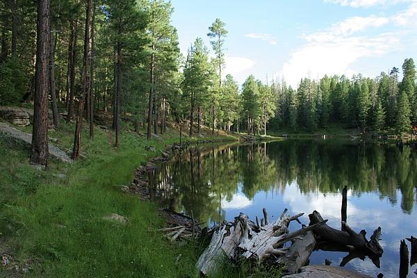 Julie Lueders  - Forest Lake