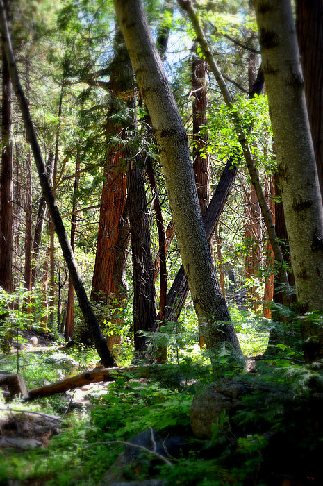 Glenn McCarthy Art and Photography - Forest Of Dreams
