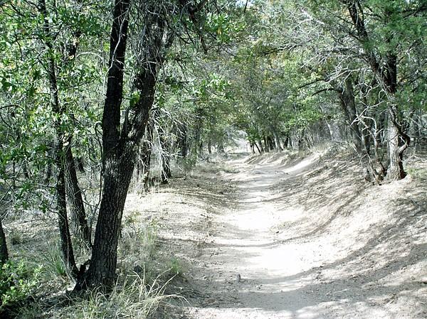 Stanley Morganstein - Forest Trail