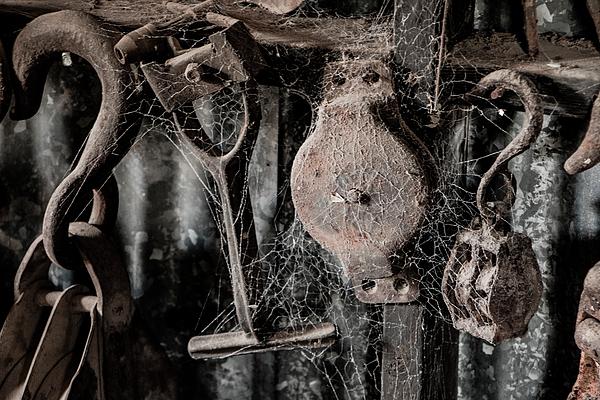 Teresa Wilson - Forgotten Tools