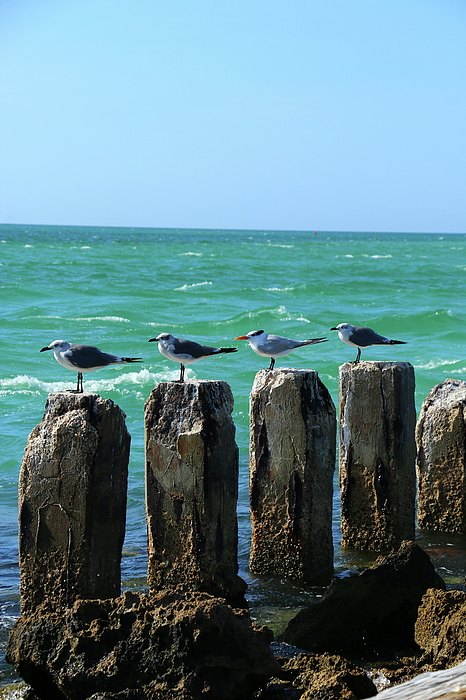Christiane Schulze Art And Photography - Four On A Jetty