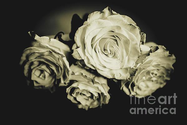 Chellie Bock - Four Roses