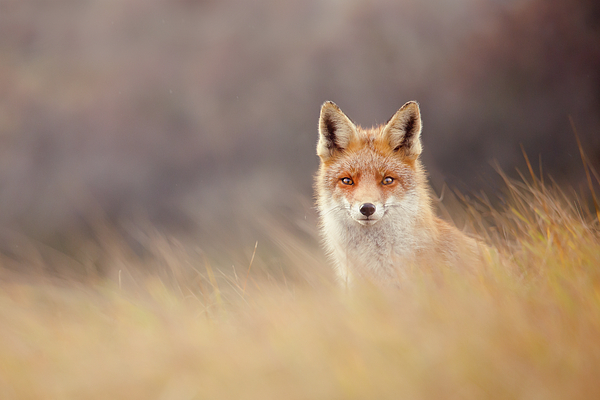 Roeselien Raimond - Fox n Fog