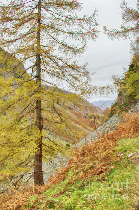 Linsey Williams - From Castle Crag Cumbria