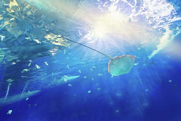 Mariia Kalinichenko - From depth to light, a view from the underwater world