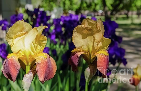Mellissa Ray - Full Bloom