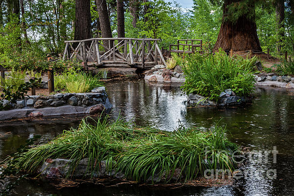 Webb Canepa - Garden Pond