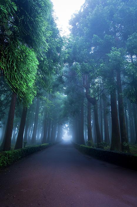 Edgar Laureano - Giants in the fog