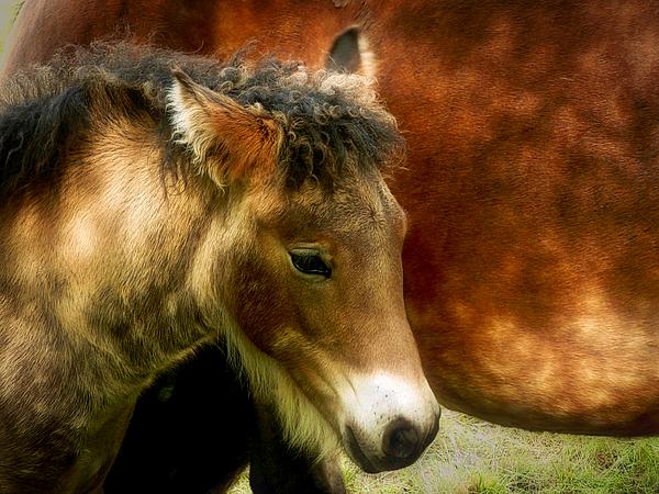Jane Selverstone - Glosa horse