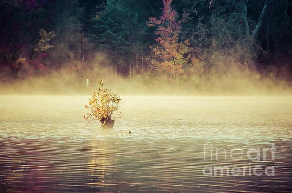 Melissa Fague - Golden Mist on Waples Pond Landscape Photo