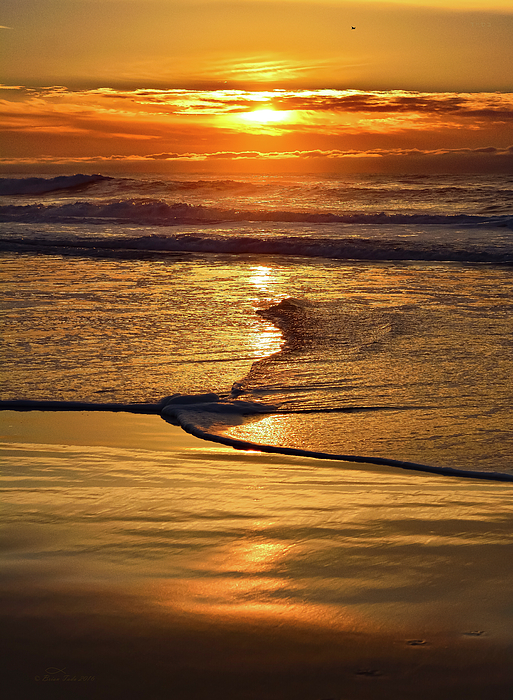 Brian Tada - Golden Pacific Sunset