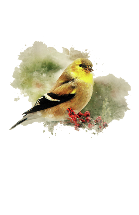 goldfinch watercolor art t shirt for sale by christina rollo. Black Bedroom Furniture Sets. Home Design Ideas