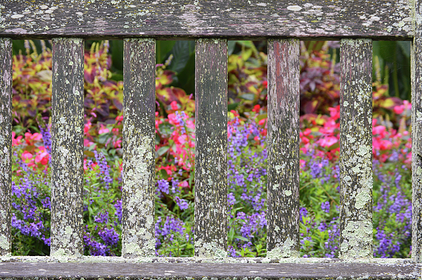 Good Morning Garden Bench Throw Pillow For Sale By Pic Michel