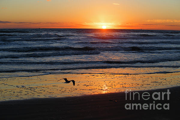 TN Fairey - Good Morning Sunshine - South Padre Island