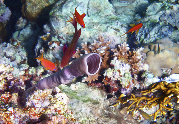 Johanna Hurmerinta - Gorgeous Red Sea World