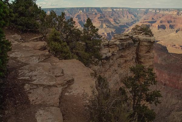 Joanne Murray - Grand Canyon Arizona trees