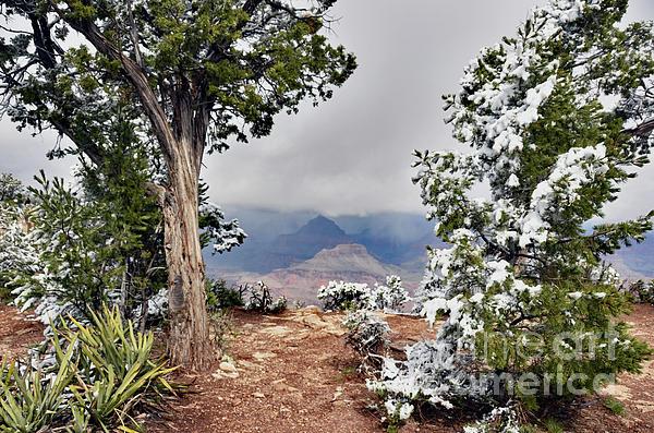 Debby Pueschel - Grand Canyon Through the Trees